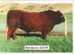 Rotokawa 425/95
