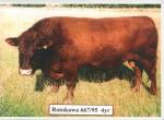 Rotokawa 667/95 4 yr